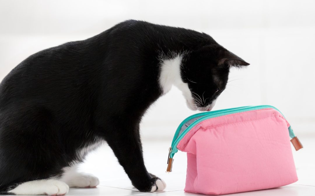 Did Curiosity Kill the Cat?